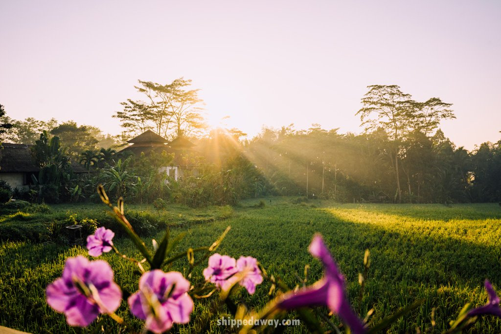 Sunrise over the rice fields in Bali