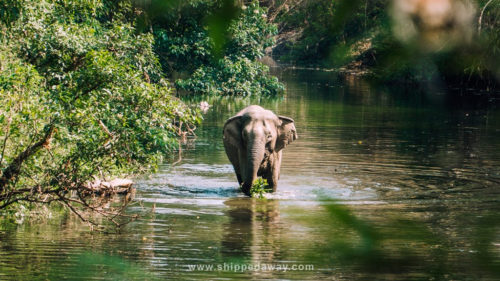 Ethical elephant experience in Yok Don National Park, Vietnam