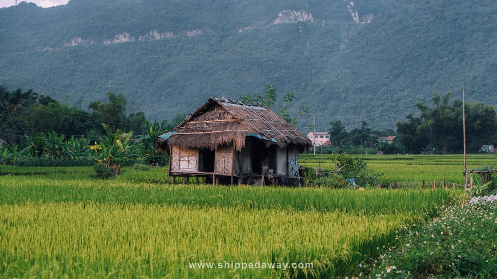 Local house in the middle of Mai Chau rice fields