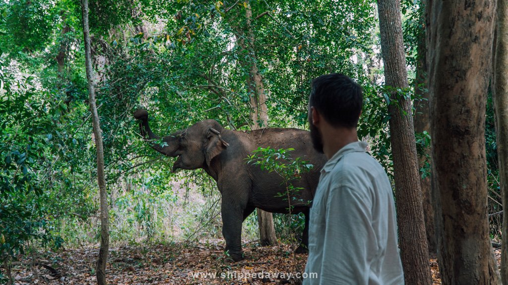 Observing elephants on the ethical elephant experience in Yok Don National Park