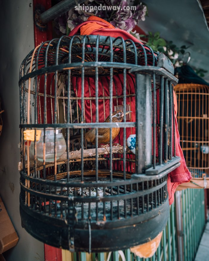 Bird in a cage at Hanoi's Train Street